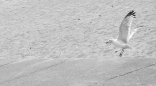 Seagulls don't give a darn