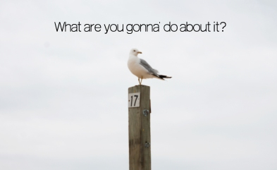 uncaring seagull